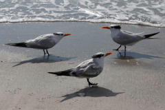 BMK - Beach 19